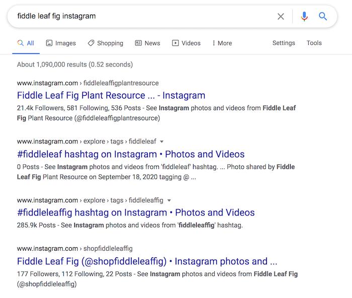 Instagram SEO Resultados de Google para Fiddle Leaf Fig Instagram