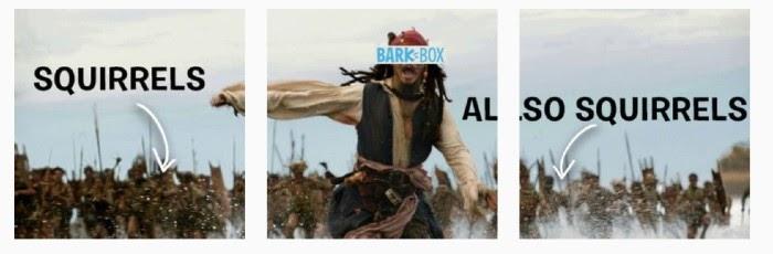 BarkBox Instagram Meme para marketing