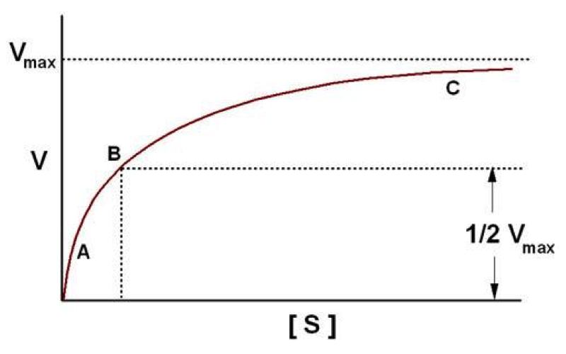 curva hiperbólica invertida